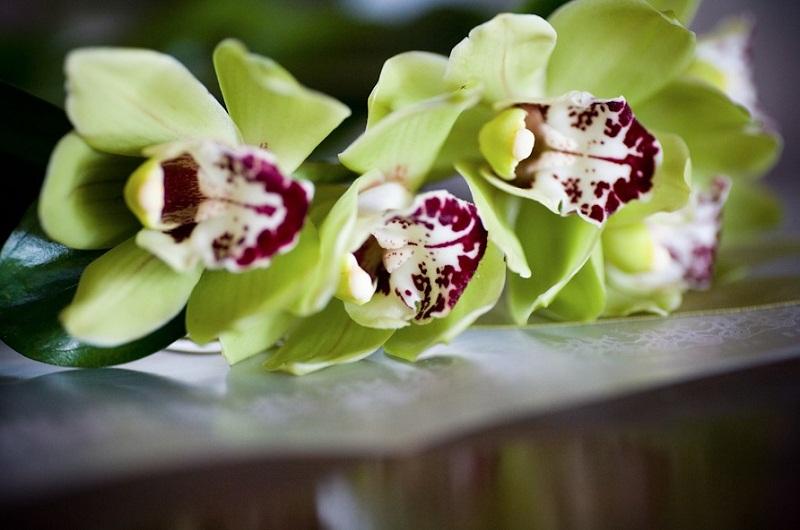 green orchids cymbidiums floral design los cabos elena damy