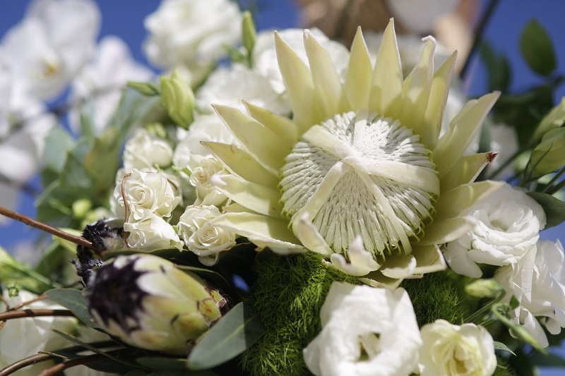 White Protea Wedding Flowers for Beach Weddings Mexico Elena Damy Floral Design