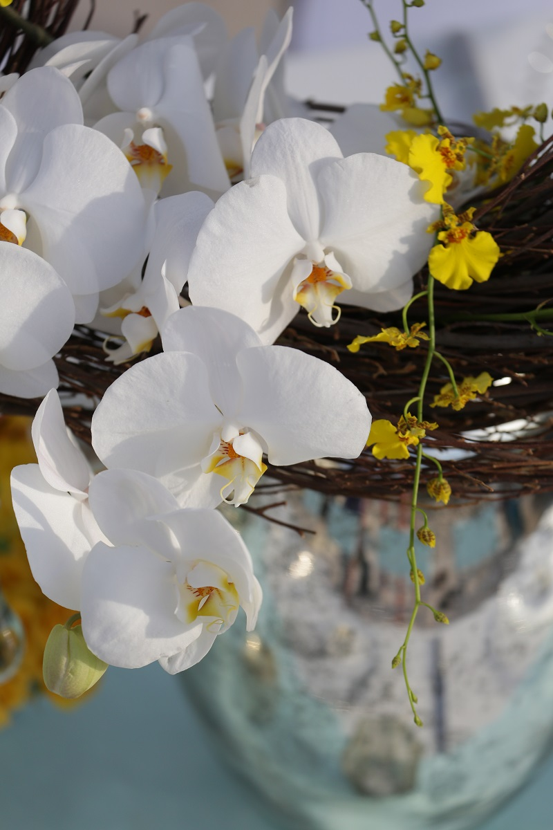 beach weddings elena damy destination wedding planners white orchids aqua linens chris plus lynn 18