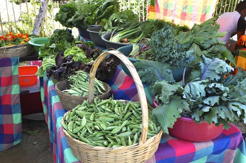 Saturday Mornings at Organic Mercato San Jose Los Cabos Travel with Elena Damy 4