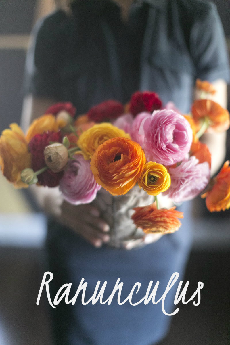 Elena Damy Ranunculus Spring Flowers For Weddings Elena Damy