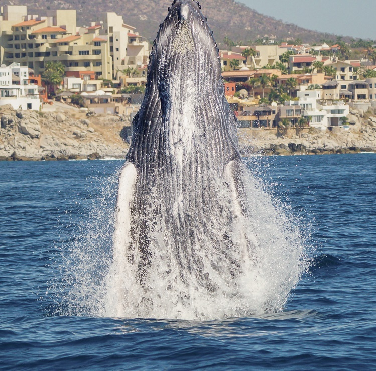 whale watching los cabos mexico cabo trek elena damy destination weddings activities for guests