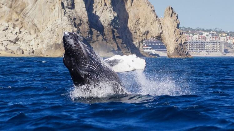 Elena Damy Wedding Activities In Cabo Whale Watching
