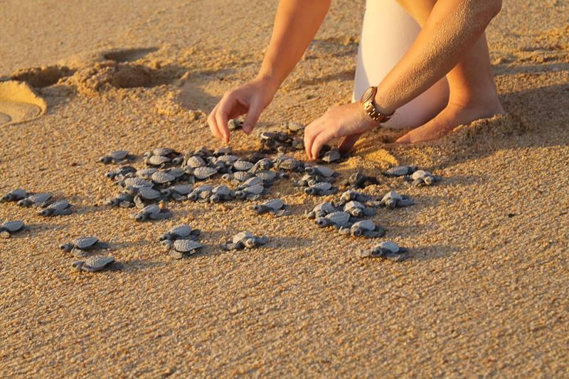 Wedding Planner Elena Damy Cabo Sea Turtles 1