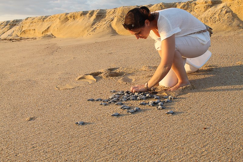 Elsa Dilasser Wedding Planner Elena Damy Cabo Sea Turtles 3