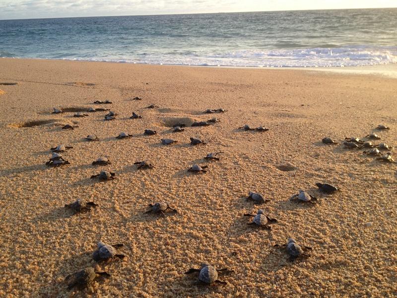 Wedding Planner Elena Damy Cabo Sea Turtles 5