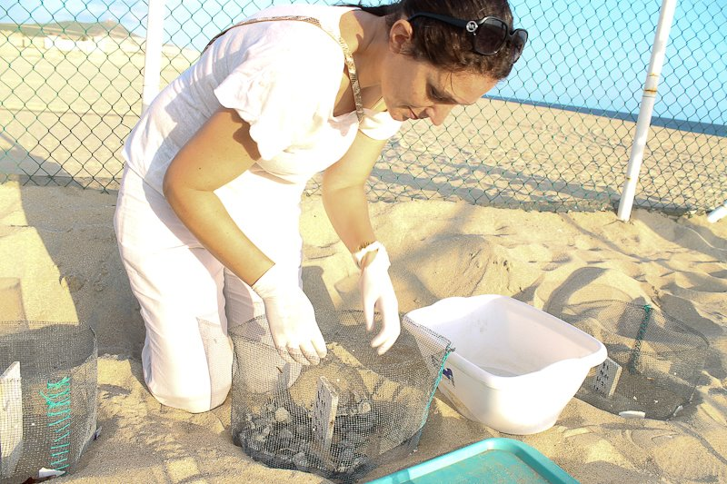 Elsa Dilasser Wedding Planner Elena Damy Cabo sea turtles 2