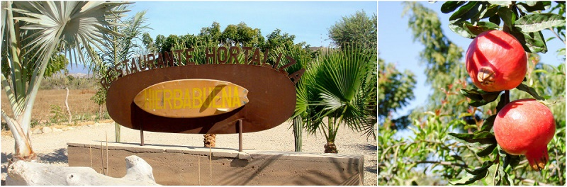 Restaurante Hortaliza Hierbabuena Best Baja Restaurants Elena Damy Destination Weddings 5