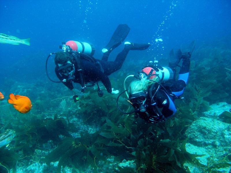 cabo scuba diving elena damy
